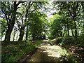 NZ1649 : Beech Trees at Greencroft Park by Robert Graham