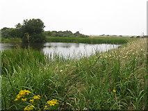 NT4681 : Marl Loch at Aberlady Bay LNR by M J Richardson