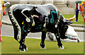 J3374 : Cow Parade, Belfast (1) by Albert Bridge