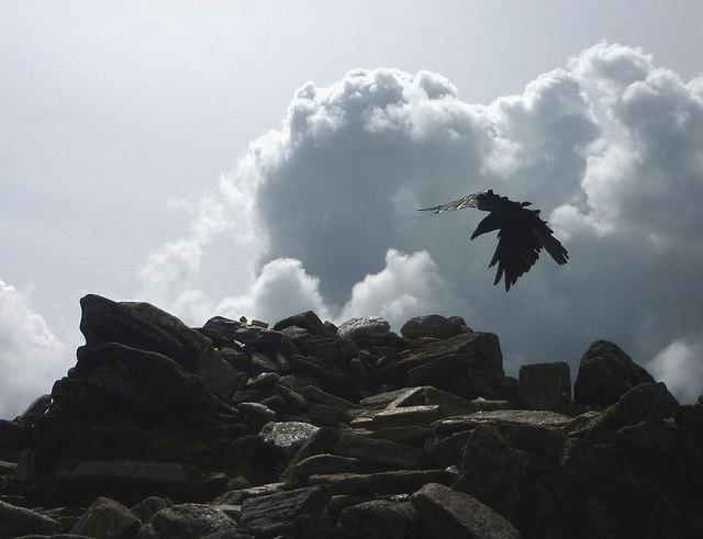 A spirit of the mountain alights on Ben Lui