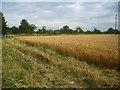 TL4749 : Corner of the wheat field by Enttauscht