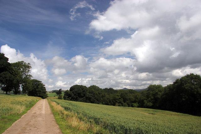 Hollinhall driveway and cornfields