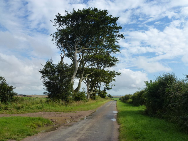 Trees on the brow of the hill, Choseley Road near Thornham