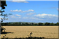 SU0458 : 2012 : Wheatfield from the A342 by Maurice Pullin