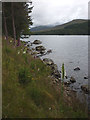 NN3968 : Loch Ossian, the northern shore at Clach Bhiorach by Karl and Ali