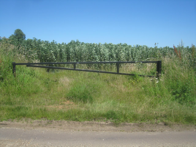 Simple barrier - broad bean field