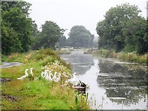 N2824 : Grand Canal & Geese in Kilgortin, Co. Offaly by JP