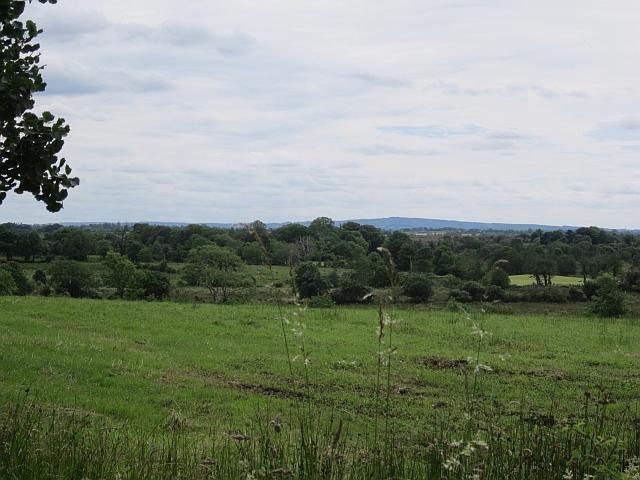 Grassland beside the Moy
