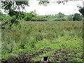 G4513 : Rashy ground, Sessuegarry by Richard Webb