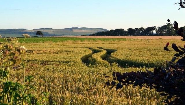 Farmland near Todhall