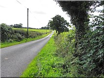 H4178 : Cashty Road by Kenneth  Allen