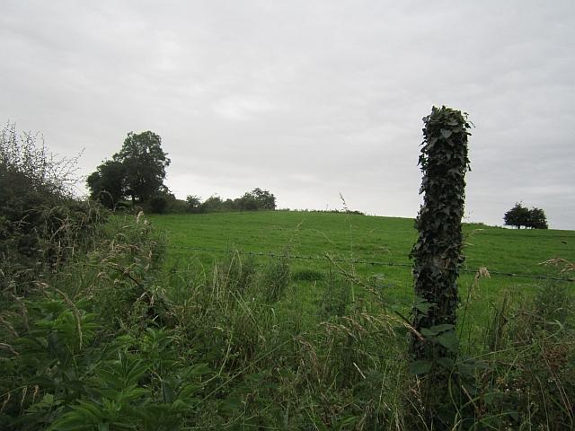Grass fields, Newcastle
