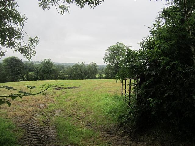 Field, Rosehill