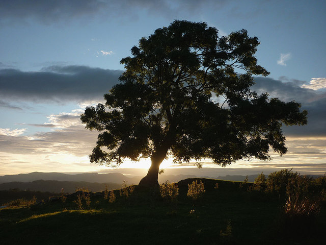 Evening tree by the Dales Way