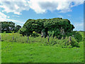 NS1900 : St Donan's Chapel Ruin by Mary and Angus Hogg
