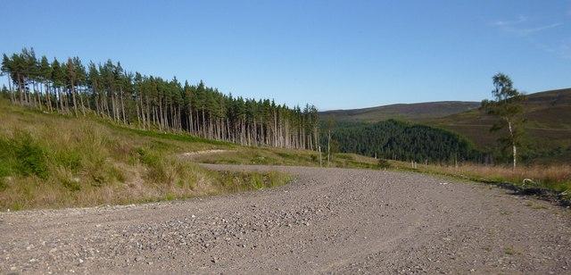 Track through Boblainy Forest