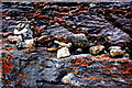 R0597 : Doolin - R479 - Harbour - Rocks with Rusty-Like Deposits & Plants in Crevices by Joseph Mischyshyn