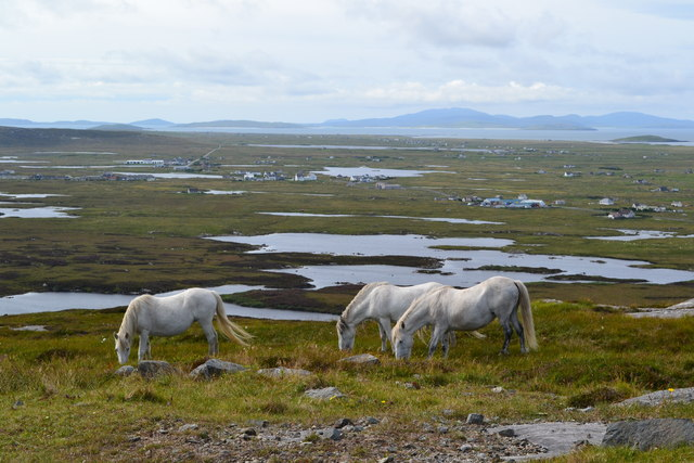 Ponies grazing near the summit of Aisgerbheinn
