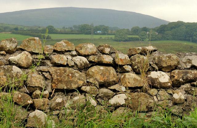 Drystone wall near Larne