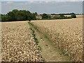 TL6148 : Path near Streetly End by John Sutton
