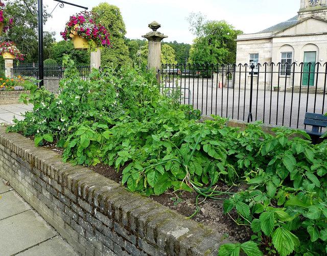 Vegetable Bed in Forres
