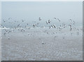 NO6949 : Terns on the Sand by Anne Burgess