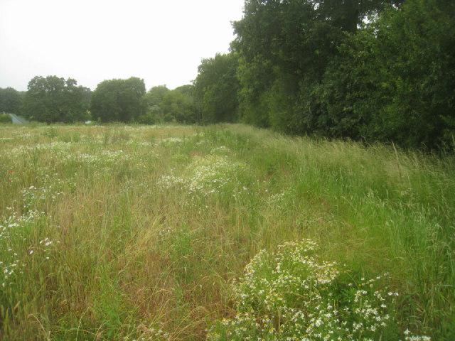 Wild field margin by Sandy B