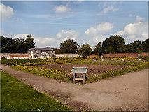 SJ9921 : The Walled Garden, Shugborough by David Dixon