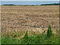 TF2412 : Stubble field near Little Lodge Farm by Christine Johnstone