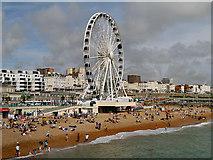 TQ3103 : Brighton Wheel and Beach by David Dixon