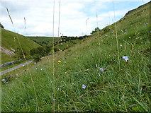 SK2055 : Wildflower meadow on the hillside by Richard Law