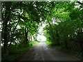 SP9695 : A tunnel of trees on the road to Blatherwycke by Christine Johnstone