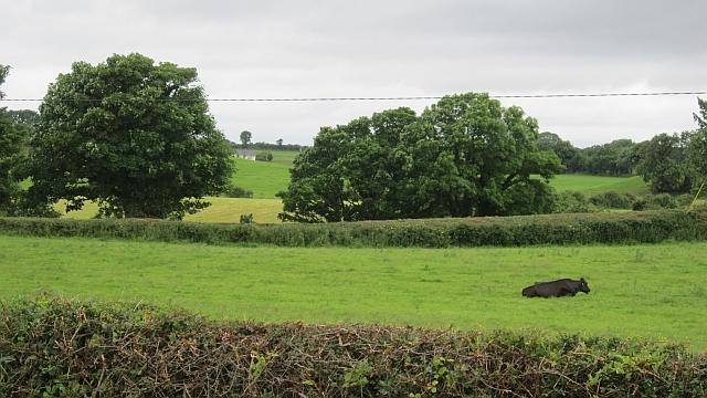 Carrowcloghagh