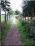 SP9532 : Greensand Ridge Way by Woburn Park by Philip Jeffrey