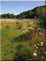SX9066 : Former landfill, Barton by Derek Harper