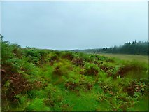 NX2752 : Moor to the east of Craignarget Hill by Andy Farrington
