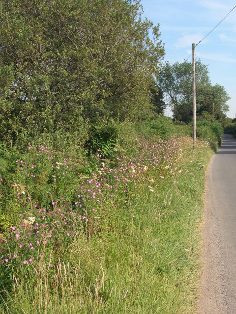 Roadside flowers south east of Kenfig Hill