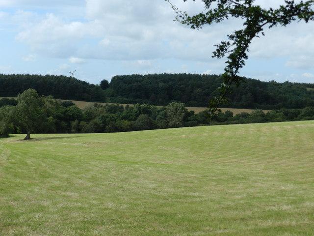 Field, grass growing back