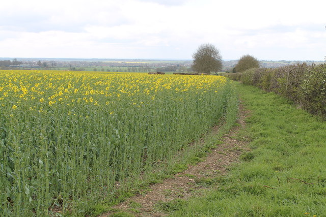 OilSeed Rape crop near Glebe Farm