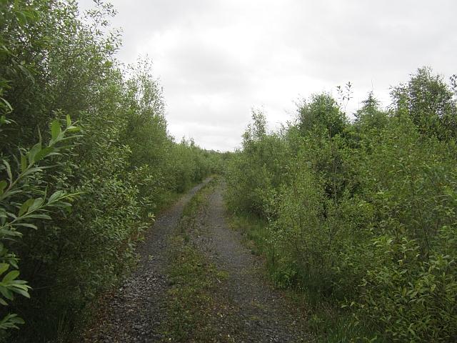Forest road, Prughlish
