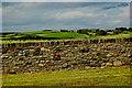 R1188 : N67 - Wall, Grassland, Dwellings north of Famine Memorial by Joseph Mischyshyn