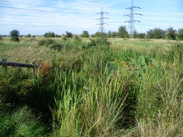 Scene on Higham Marshes