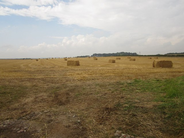 Winter Barley Bales near Pasturehill