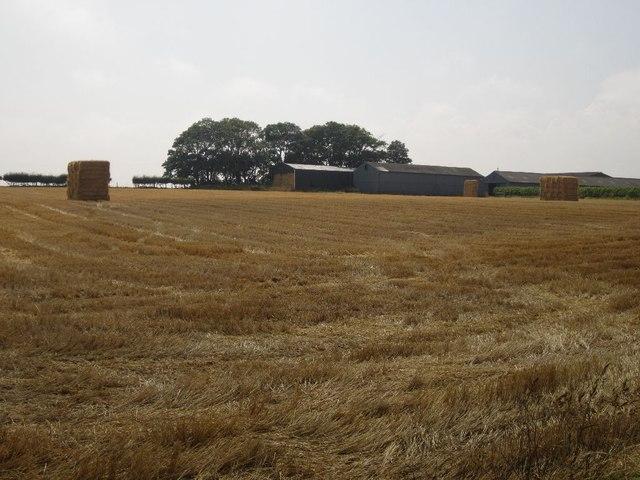 Barley straw bales awaiting collection near Southfield