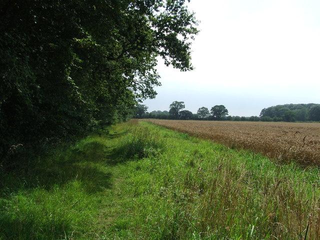 Footpath And Field Edge