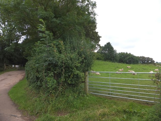Private drive to the Manor House and field of sheep