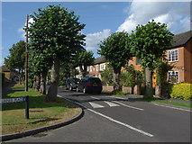 TQ0464 : Lime Grove by Alan Hunt