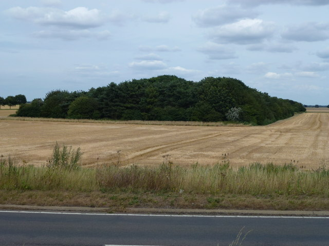 Triangular plantation south of Suckling Drove