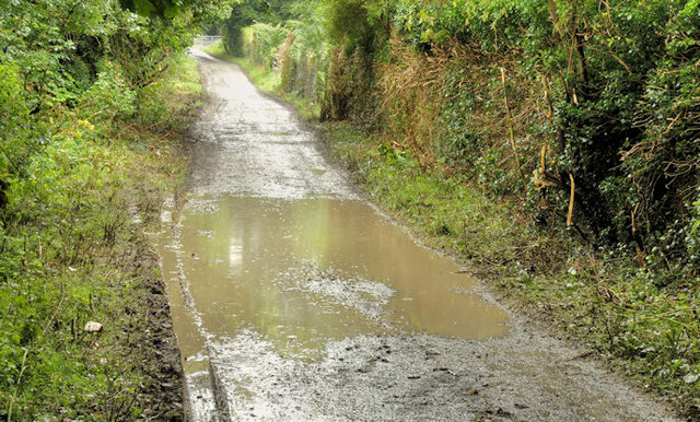 Muddy path, Clandeboye Wood near Bangor