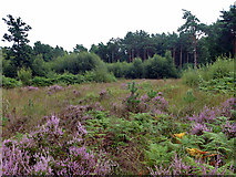TQ1361 : Open area, Esher Common by Robin Webster